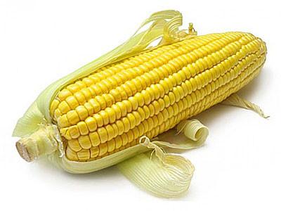 Купить Семена кукурузы П9000