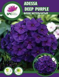Флокс метельчатый Adessa Deep Purple