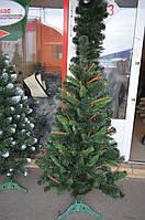 Карпатская ель с шишками 1м