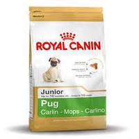 Royal Canin сухой корм для щенков породы мопс в возрасте до 10 месяцев - 500 г