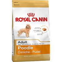 Royal canin сухой корм для собак породы пудель от 10 месяцев - 500 г