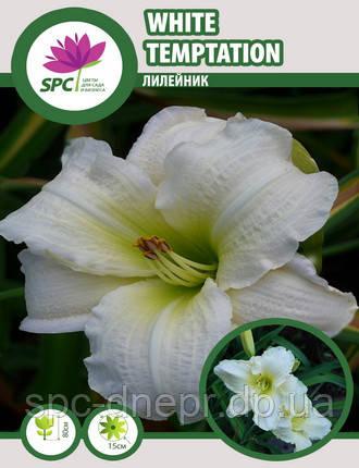Лилейник  White Temptation, фото 2