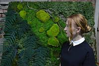 Картины с стабилизированным мхом и других растений