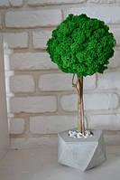 Дерева з моху в бетонних горщиках