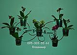 """Підставка для квітів на 7 чаш """"Джумейра-4"""", фото 2"""