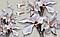 """3D фотообои """"Нежные цветы и голуби"""", фото 2"""