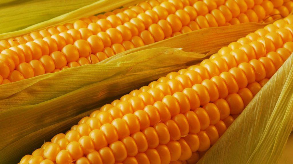 Купить Семена кукурузы Солонянський 298 СВ