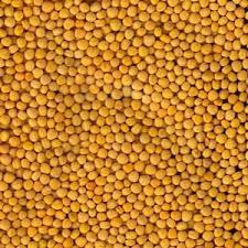 Семена горчицы желтой ТАВРИЧАНКА элита 1 репродукция