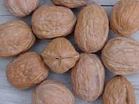Прививка ореха (Опыт США)