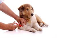 Вакцинация у собак
