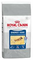 Royal Canin Energy 4300, для активных собак 15 кг