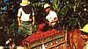 Арабика высшего качества из Коста-Рики
