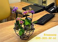 Настольная-5, подставка для мини-орхидей и кактусов