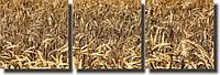 "Картина модульная ""Пшеница""  (350х1090 мм)  [3 модуля]"