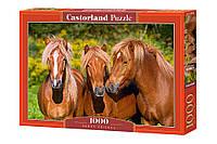 Пазлы Castorland 1000 Лошади, С-103959