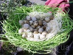 Лечебные свойства яиц