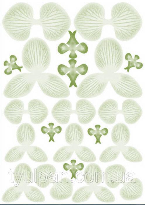 Вафельные картинки для вафельной флористики орхидея салатовая