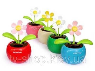 Солнечный цветок Flip Flap (4 вида)
