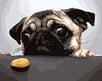 """Картина для рисования """"Мопс и печенька"""" 40 х 50 см, Без Коробки"""