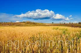 """Семена озимой пшеницы """"ГУРТ"""" (Элита)"""
