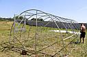 Теплица ЭКО - ТОП4  4х6 стандарт 10 мм, фото 7