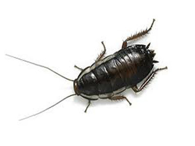 Тараканы заводятся в кухнях и ванных комнатах, так как любят влажные места