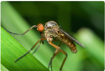 Комары прилетают с улицы через открытые двери и окна