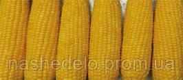 GH 6462 F1 100000 сем. кукуруза Сингента