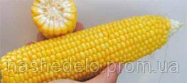 Семена кукурузы сахарной GSS 8529 F1 100000 семян Syngenta