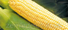 Семена кукурузы сахарной Бостон F1 100000 семян Syngenta