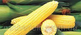 Семена кукурузы сахарной Джубили F1 100000 семян Syngenta