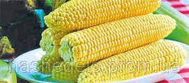 Семена кукурузы сахарной Спирит F1 1 кг. Syngenta
