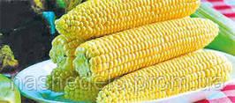 Семена кукурузы сахарной Спирит F1 100000 семян Syngenta