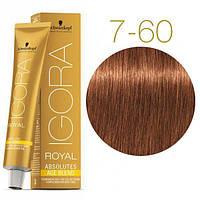 Schwarzkopf крем-краска для волос IGORA ROYAL Absolutes 100% Закрашивания седых волос 7-60 средний русый
