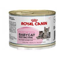 Royal Canin Babycat Instinctive (котята до 4 месяцев, беременные и кормящие кошки)