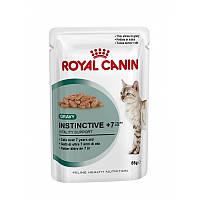 Royal Canin влажный корм для кошек старше 7 лет