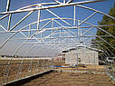 Теплица Эко Топ  6 х 40 м Стандарт 6 мм, фото 2