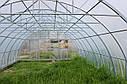 Теплица Эко Топ  6 х 40 м Премиум 6 мм, фото 9
