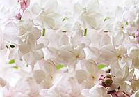 Купить 3D фотообои с цветами на стену : Цветы яблони CN3598