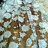 Тюль органза шелковые цветы