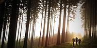 Отдых на природе – лучшее средство от усталости и стресса