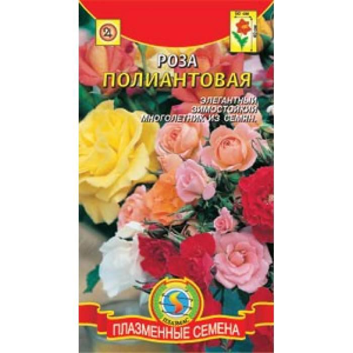 Семена цветов Роза Полиантовая