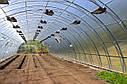 Арочные фермерские теплицы Эко Топ 8х10х3,5 Стандарт 10 мм, фото 5