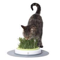 Hagen Catit Grass Garden живая зеленая лужайка для кошек