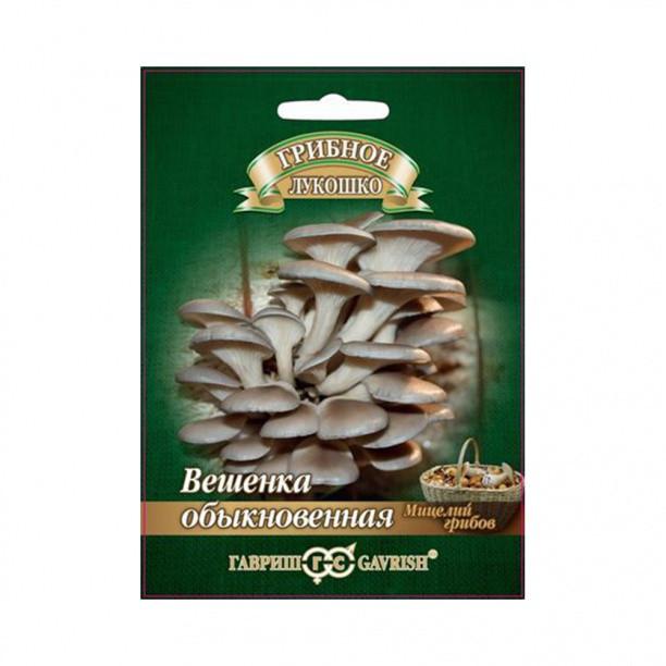 Грибы мицелий Вешенка Обыкновенная на древесных палочках