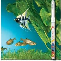 Dennerle Trocal T5 Color Plus 24W/549mm, люминесцентная лампа