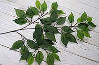 Лист фикуса зеленый , фото 1
