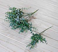 Ветка зелени эвкалипта бирюзово-зеленого цвета, фото 1