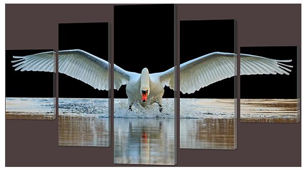 Модульная картина Лебедь садится на воду