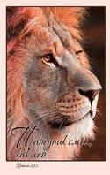 Праведник смел как лев Притчи 28:1